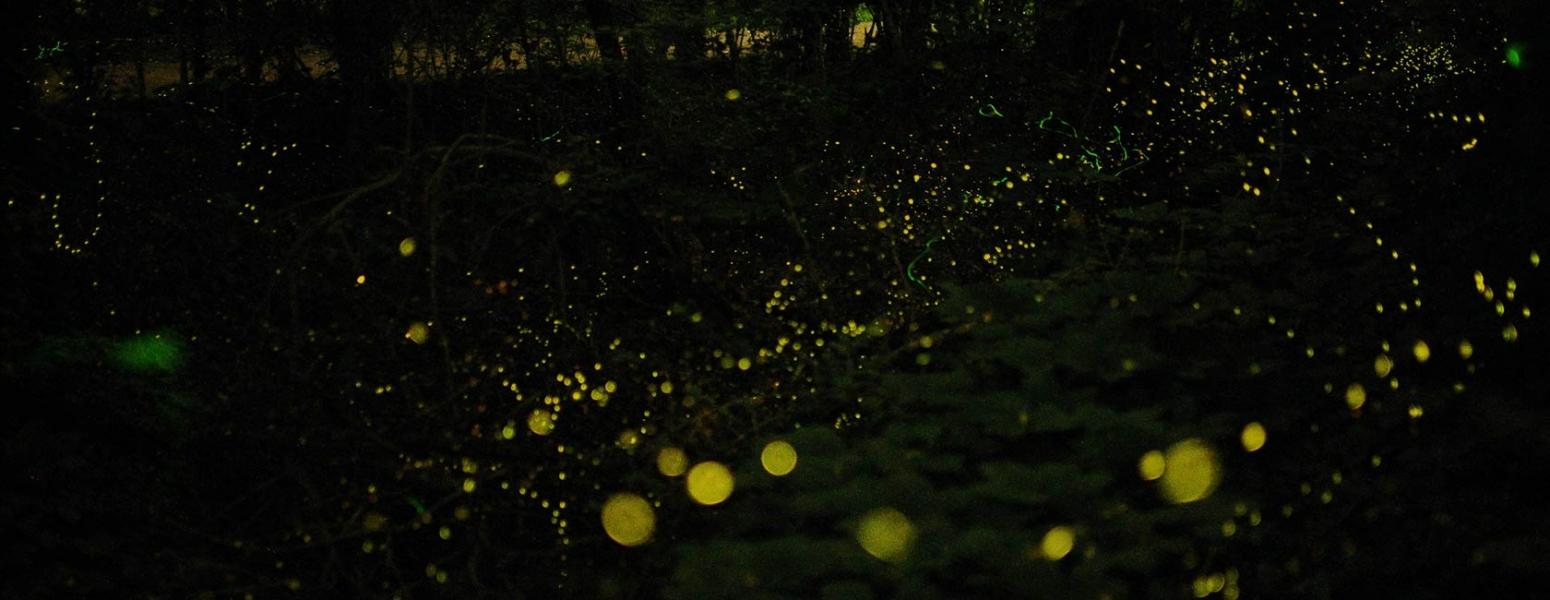 Fireflies treks near Mumbai