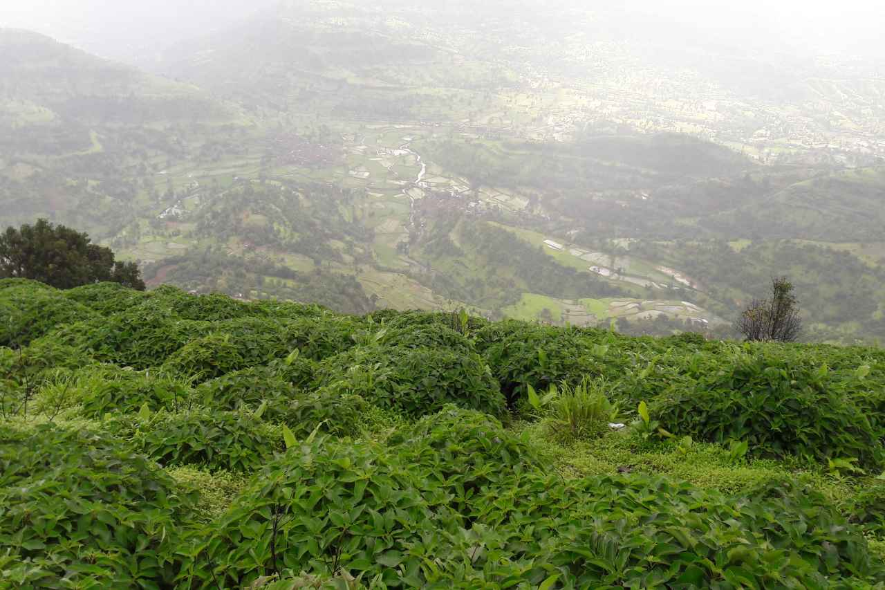 Leafy bushes on a cliff and bird's eye view of the land below.
