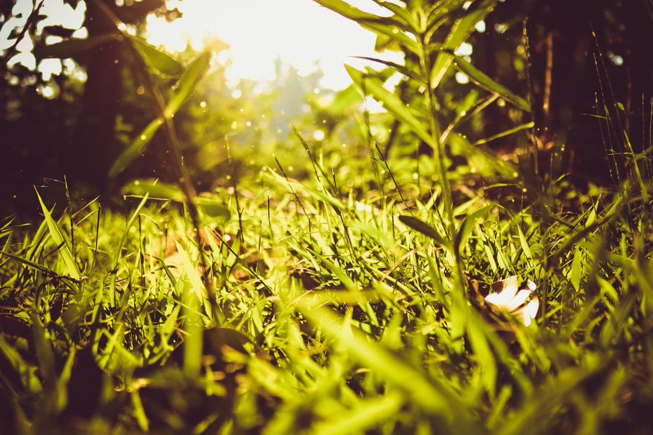 Sunlight shines onto green grass in foreground