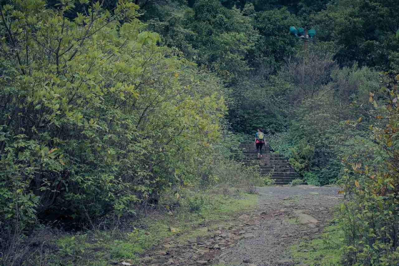 A person climbs a set of stairs surrounded by greenery