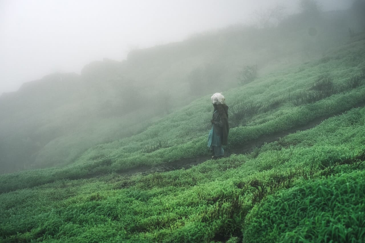 Solo person walks along green path on misty day.