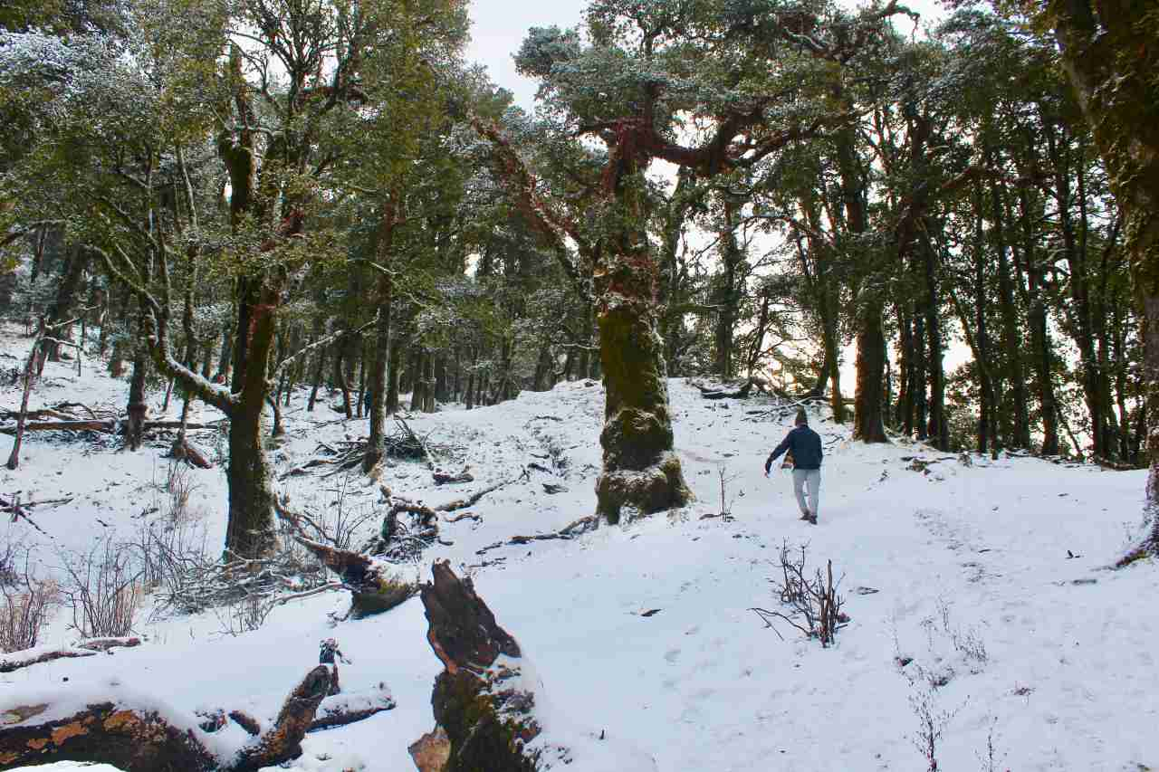 A man climbing through a snow covered forest slope
