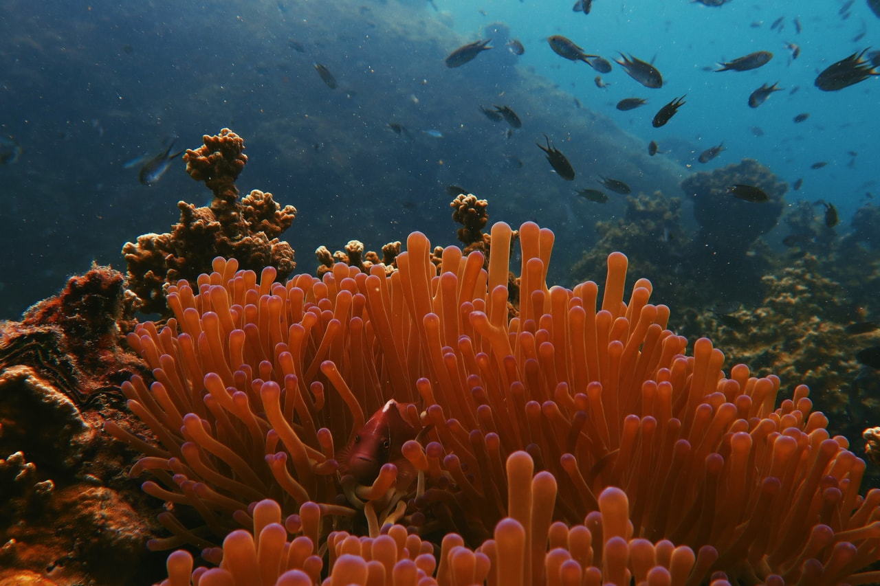 Photo of orange coral with fish in the background
