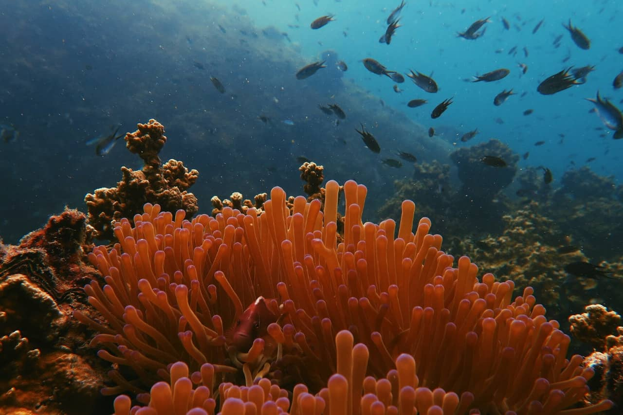 Close-up of soft coral reef with small fish behind