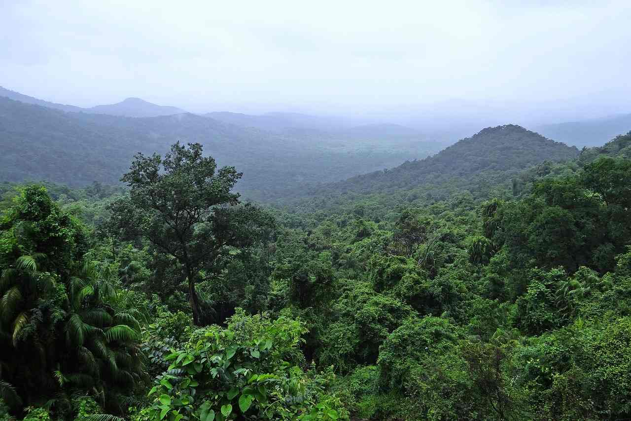 Landscape of forest covered hills.