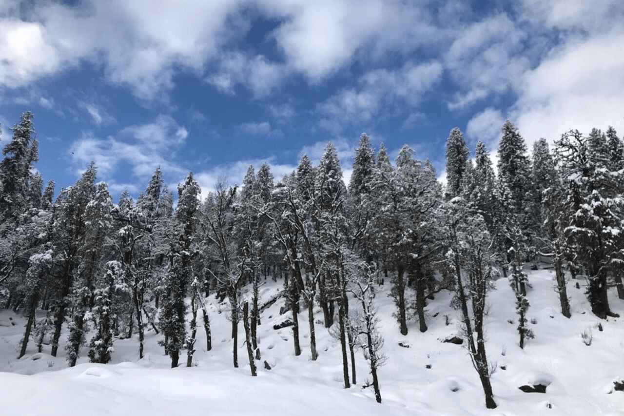 Snow covered trees against a blue sky