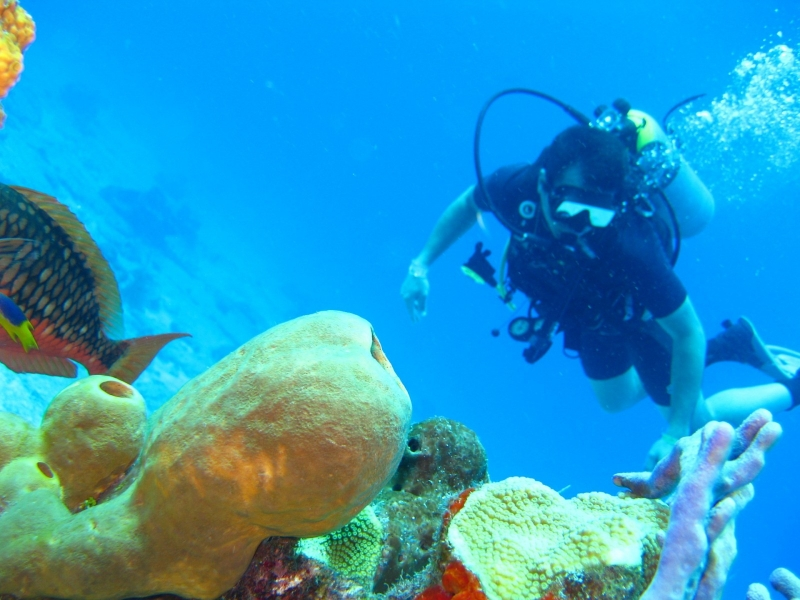 Try Dive (Lite) in Havelock Island