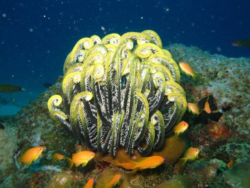 PADI Discover Scuba Diving (DSD) in Neil Island