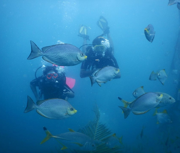 Couple's Private Discover Scuba Diving Trip
