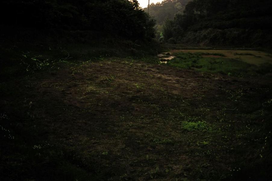 Bhandardara Fireflies Trek