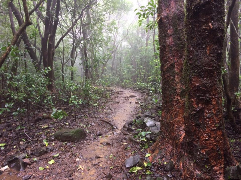Trek to Devkund Waterfall