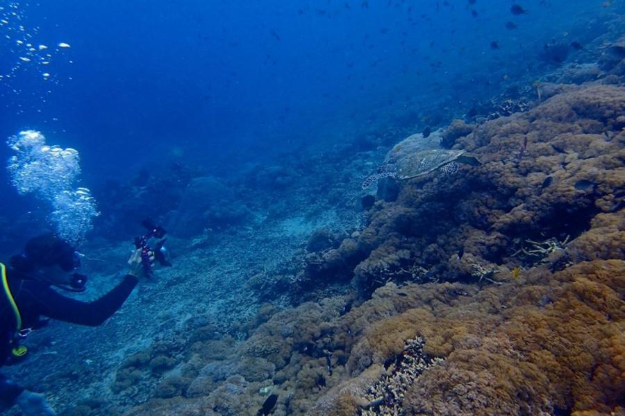 Fun Scuba Dive in Bali (for certified divers)