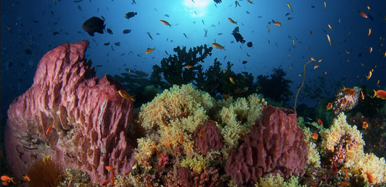 Discover Scuba Diving (DSD) (boat) in Neil Island