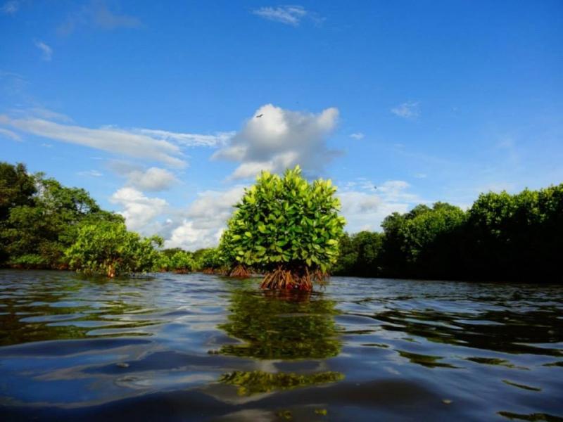 Cruise and Kayaking in Goa