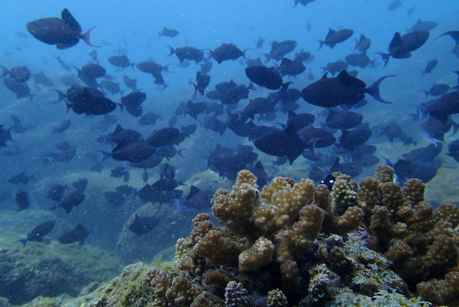 Scuba Try Dive in Murdeshwar