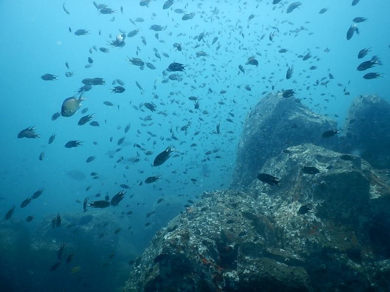 Scuba Try Dive in Udupi