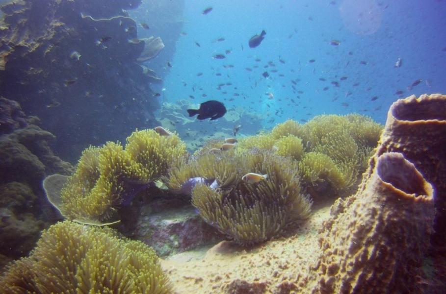 Discover Scuba Diving at Koh Chang, Thailand