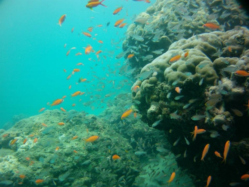 Try Dive (shore) at Nemo Reef