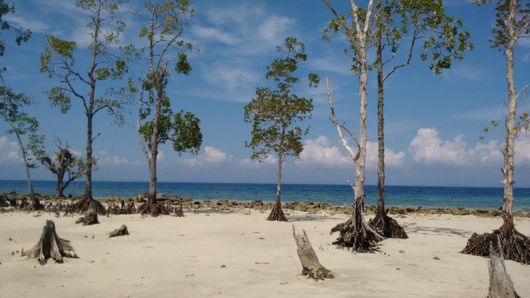 Trek to Elephant Beach, Andamans