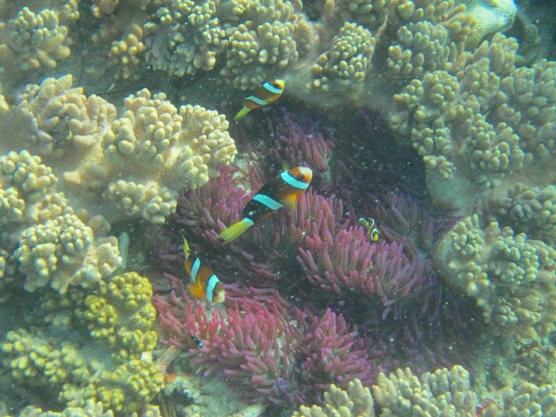Fun Dive in Padang Bai, Bali