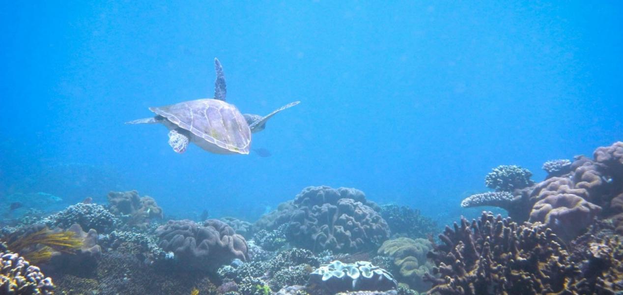 Fun Dive in Gili Biaha, Bali