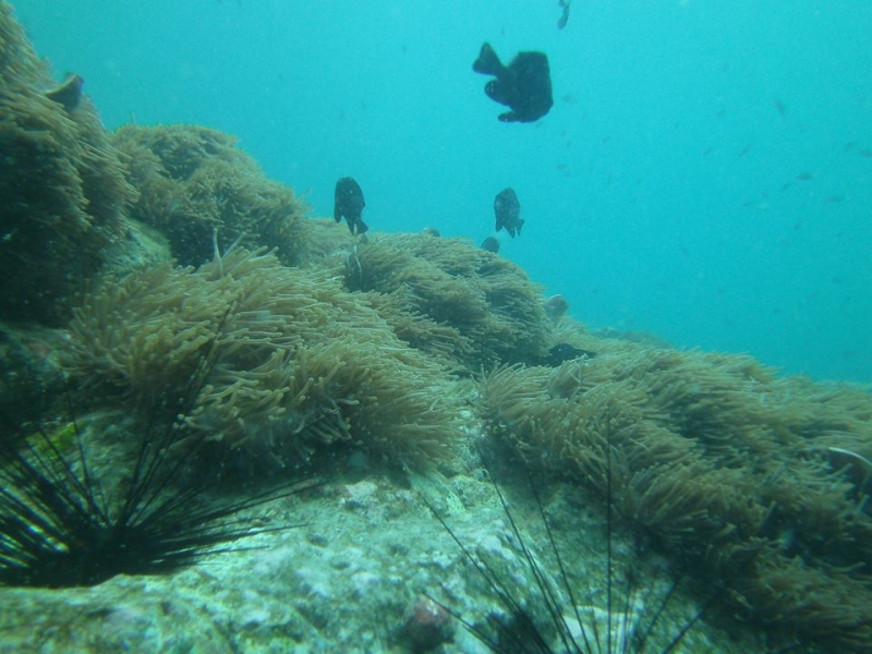 Discover Scuba Diving in Pattaya, Thailand