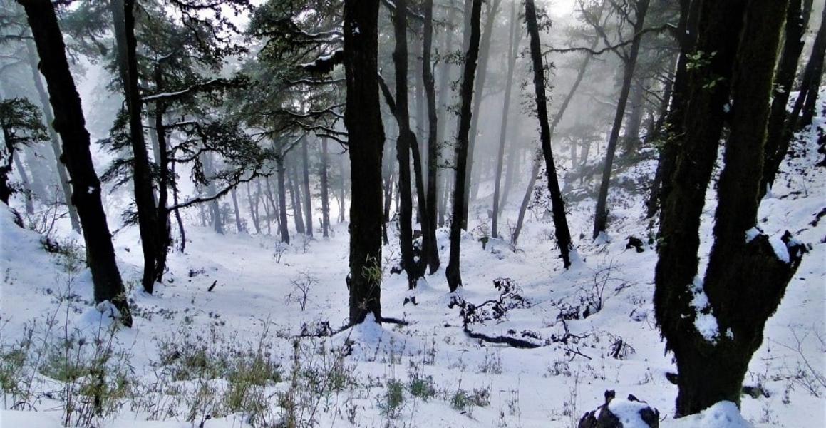 Winter trek to Devban