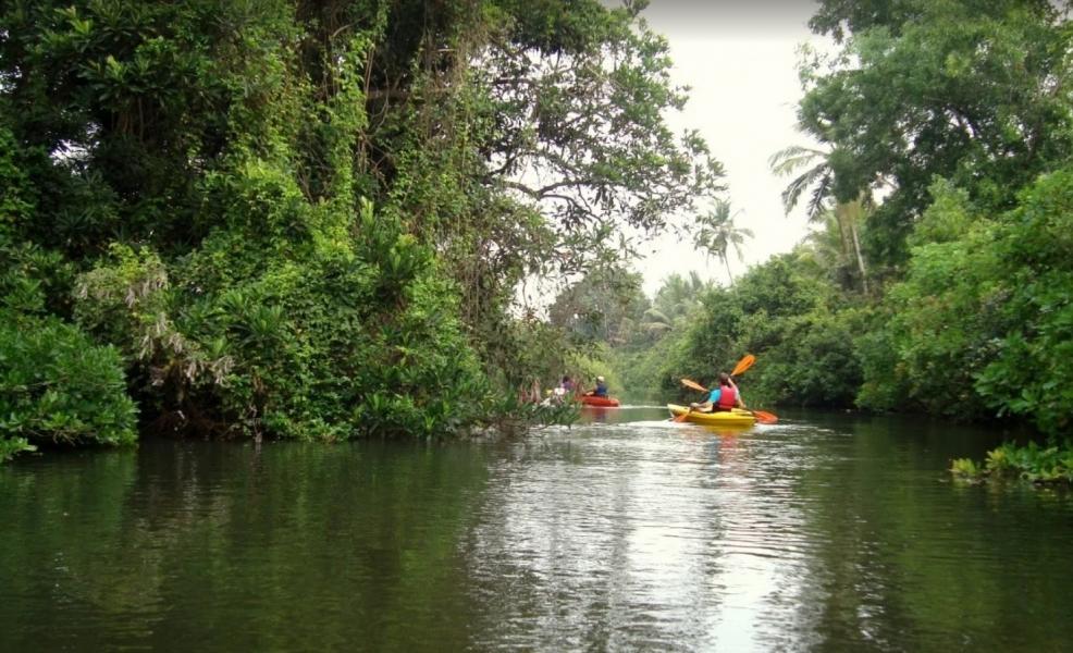 Sal Backwaters Kayaking Trip in Goa