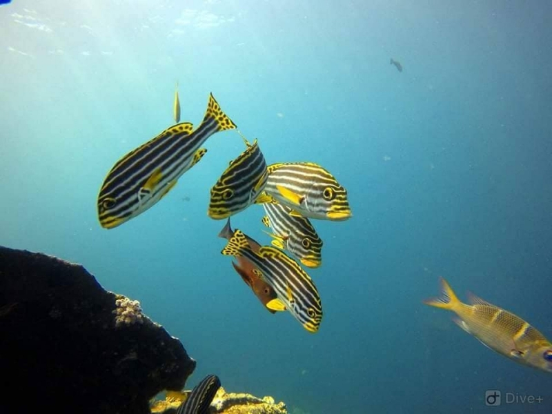 Discover Scuba Diving in Padang Bai, Bali