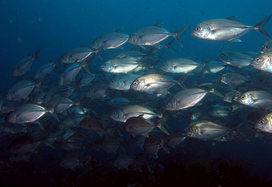 PADI Discover Scuba Diving (shore) in Tulamben, Bali