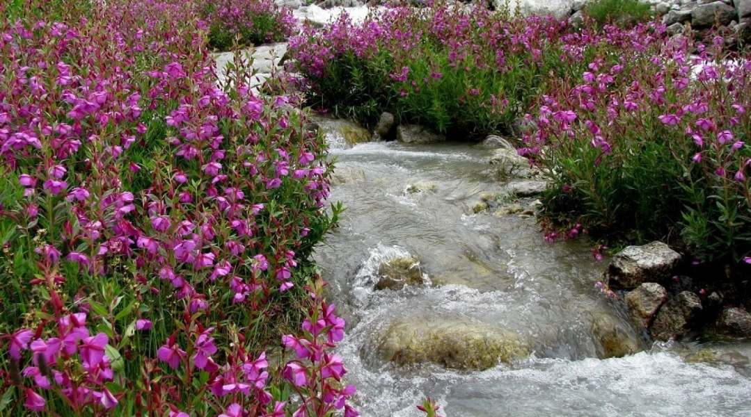 9-day trek to Valley of Flowers (with Gurson Bugyal)