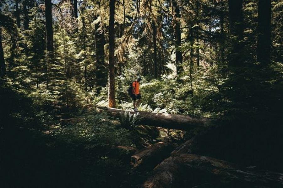 Easy trek to Binsar Sanctuary