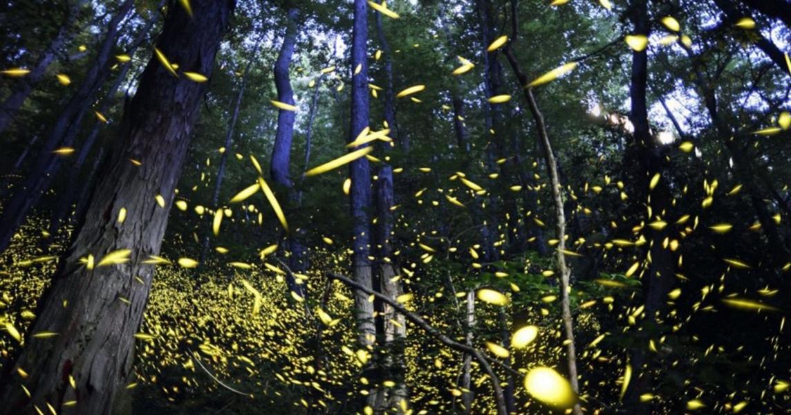 Fireflies trek near Bhandardara