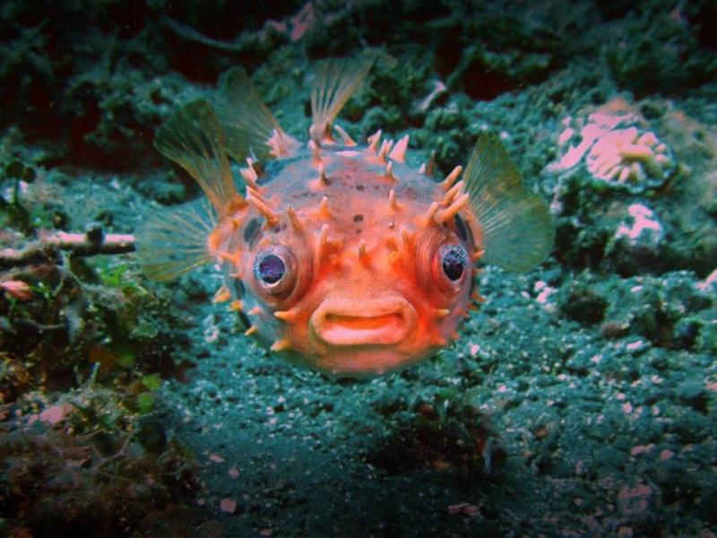 AquaMarine Diving