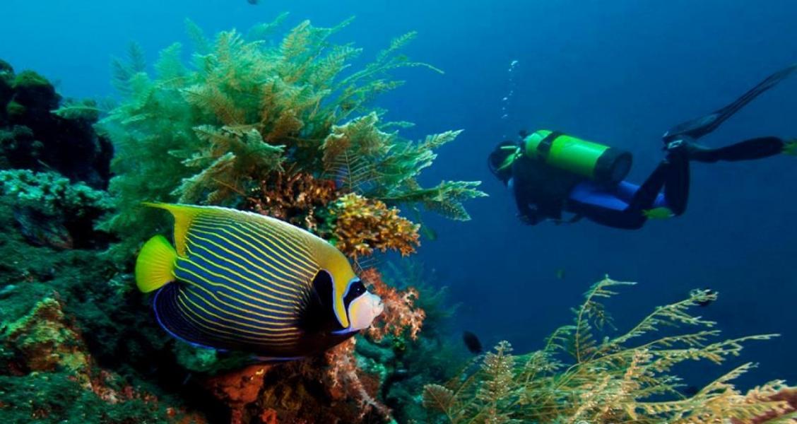 Fun Diving in Tulamben, Bali