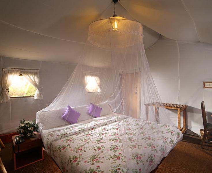 Safari Tent Stay in Munnar