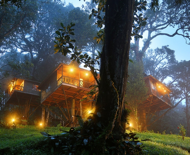 Luxurious Treehouse Stay in Munnar