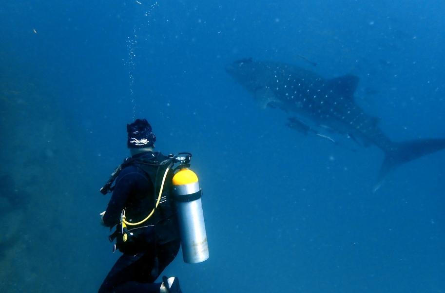 Discover Scuba Diving in Phi Phi Islands