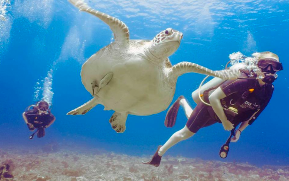 Discover Scuba Diving in the Gili Islands