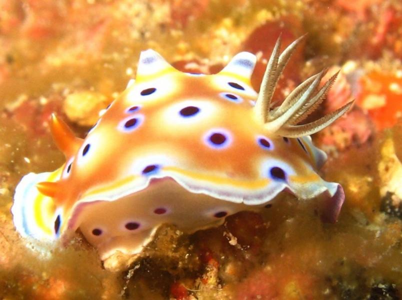 30-min Try Dive in Neil Island