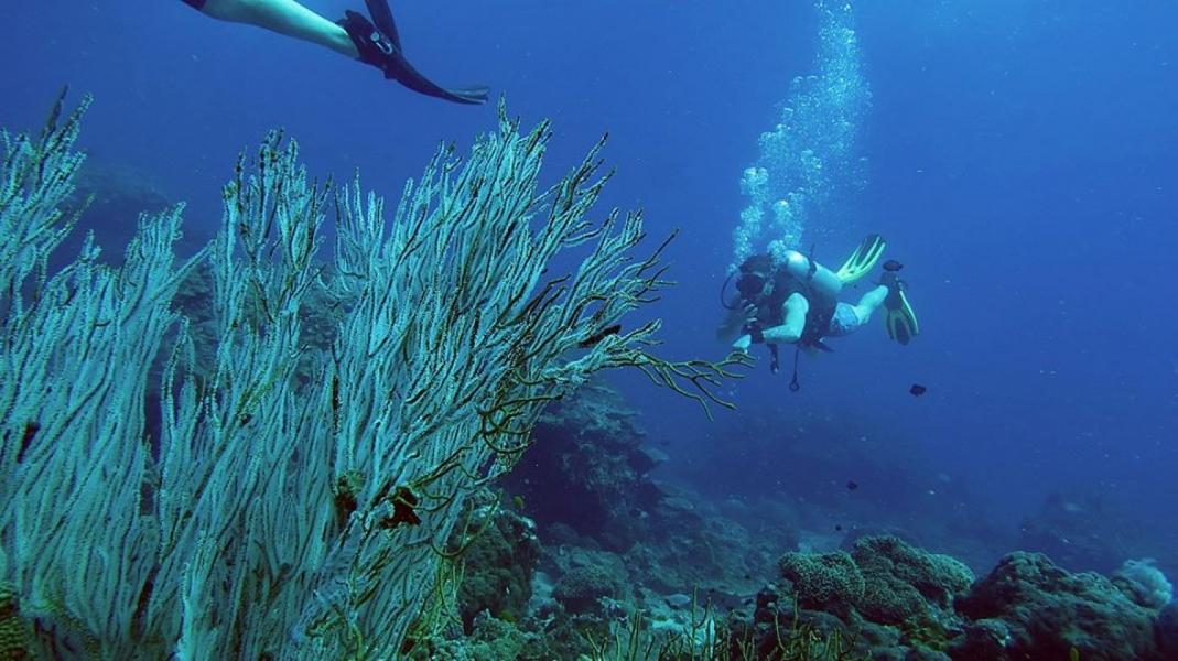 Fun Diving in the Phi Phi Islands