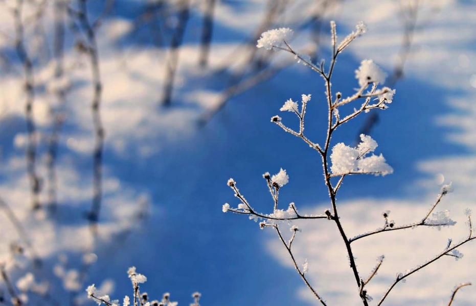 Snow Trek to Har ki Dun
