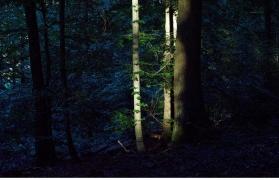 Kothaligad Fireflies Trek