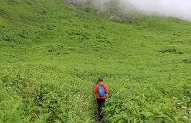Trek to Valley of Flowers