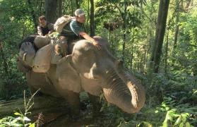 Namdapha rainforest trek