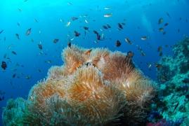 PADI Scuba Diver Course (Andamans)