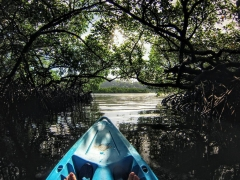 Mangrove kayaking on Havelock Island