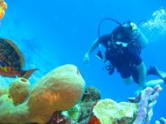 Discover Scuba Diving (shore) in Havelock Island
