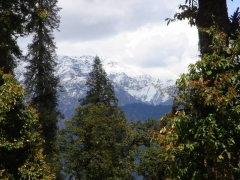 Camping in Chopta - 2 nights