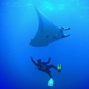 PADI Scuba Diver Course in Bali